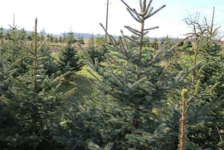 IPM for Christmas Trees: Glossary