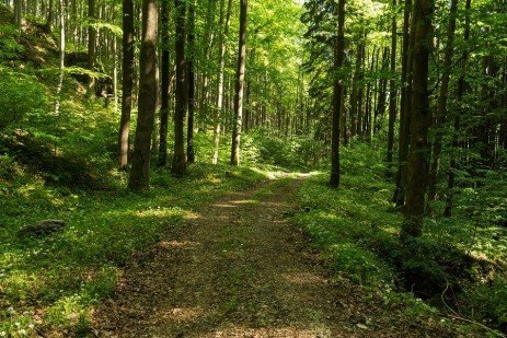 Ecotherapy – An Affordable Prescription for Better Health