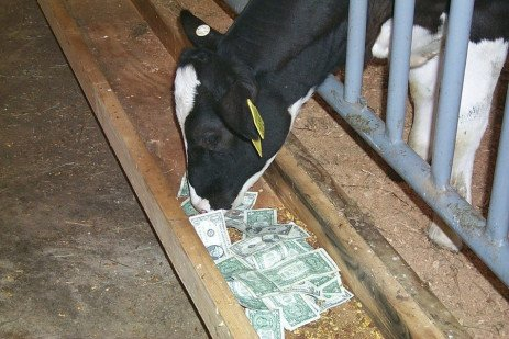 Dairy Sense: Know Your Herd's Feed Costs?