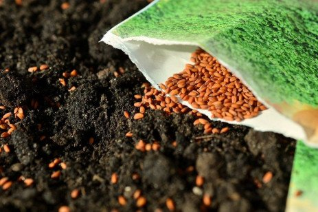 Information on Seed Packets