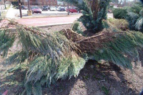 Winter Damage to Trees and Shrubs