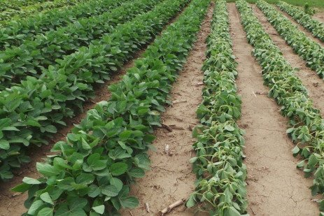 What's New in Weed Control 2018: Crop Technologies