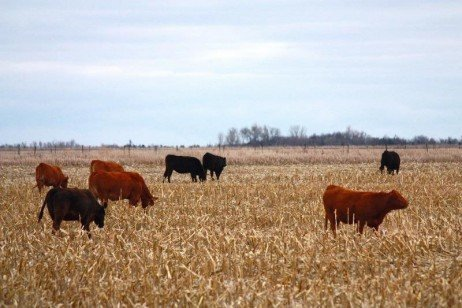 Potential to Integrate Grazing into No-Till Systems