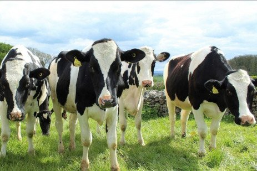 Dairy Profit Team Facilitator: A Basic Job Description