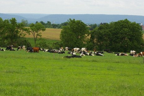 Using Nutrition Models for Lactating Dairy Cows on Pasture