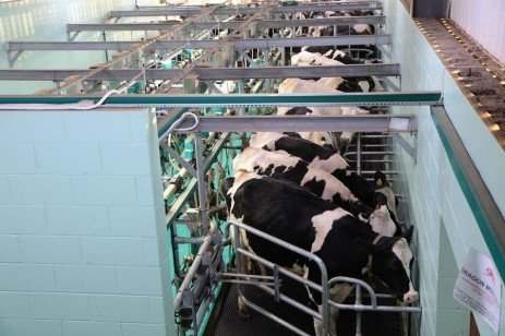 Getting a Handle on the Farm Bill and the Dairy Margin Protection Program