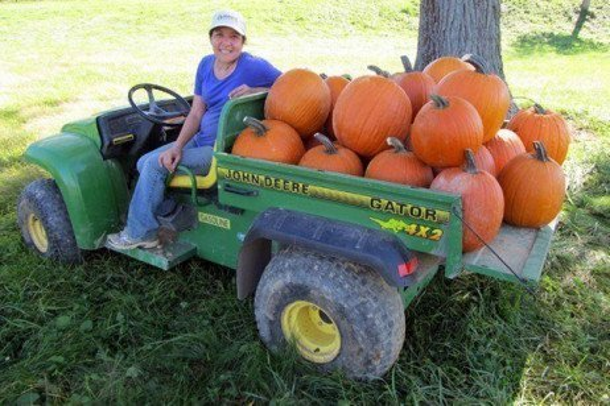 Pumpkin Cultivar Trial Results