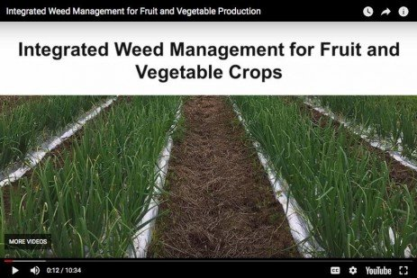 Video Series: Integrated Weed Management and Scouting