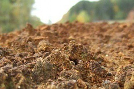 Soil pH Affects Forage Production