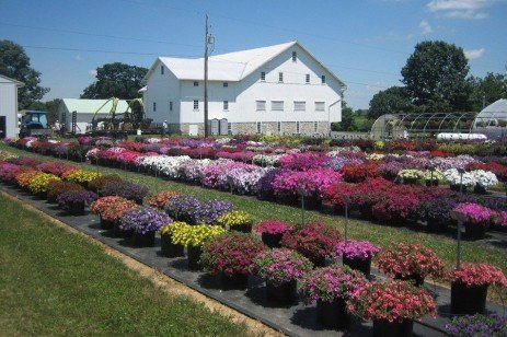Penn State Flower Trials Aid Industry, Consumers in Picking Posies