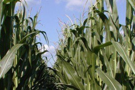 2016 Results: PA Commercial Grain and Silage Hybrid Corn Tests Report