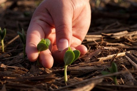 Assessing Corn and Soybean Populations and Replanting Decisions