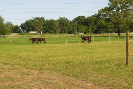 How to Make Rotational Grazing Work on Your Horse Farm