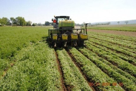 Cover Crop Considerations after Small Grain Harvest