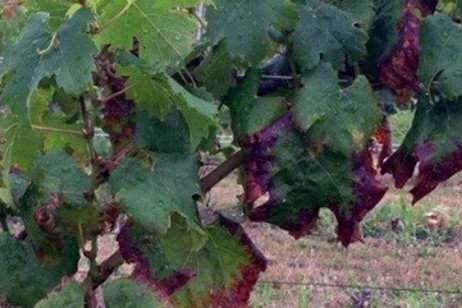 Assessing and Managing Potassium Concentration in the Vineyard