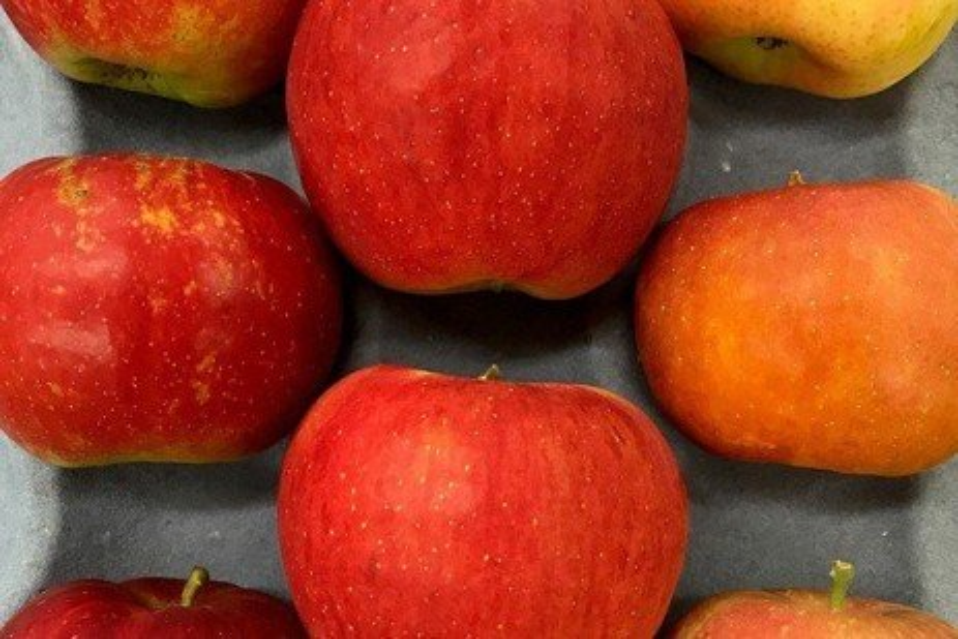 2018 Apple Maturity Assessments: Week Eight