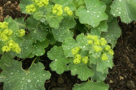 The Highs and Lows of Gardening: Vines and Groundcovers