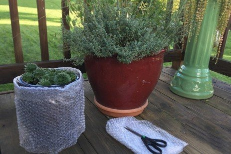 Overwintering Plants in Containers