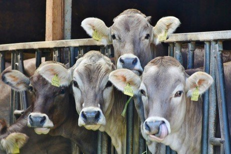 Dairy Sense: Milk Income and Ration Perspective for Milk Fat