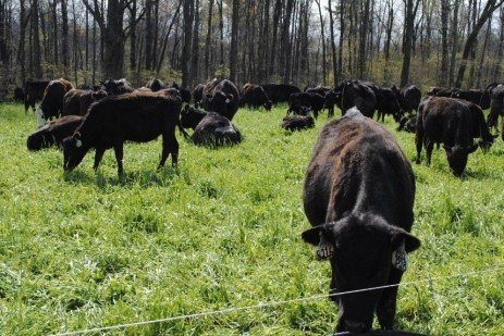 Plant Diversity to Extend the Grazing Season