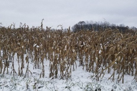 Dealing with the Weather and Unharvested Crops