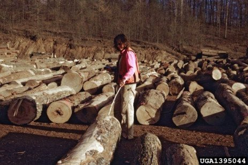 Timber Market Report: 2018 1st Quarter