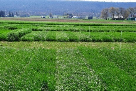 Forage Variety Trials Reports