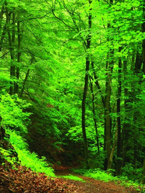 Forest Stewardship Principles for Landowners