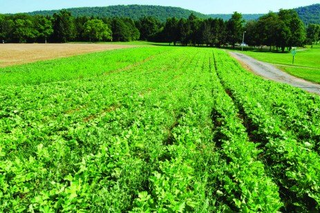Making the Most of Mixtures: Considerations for Winter Cover Crops