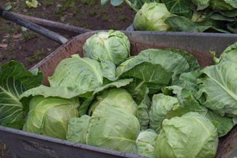Growing Produce Safely