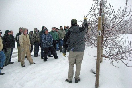 Tree Fruit Cold Hardiness - Pruning Effects