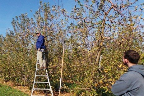 Fruit Tree Pruning - Mature Semi-Dwarf Apple Orchards