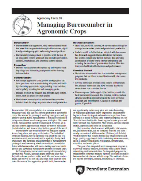 Managing Burcucumber in Agronomic Crops