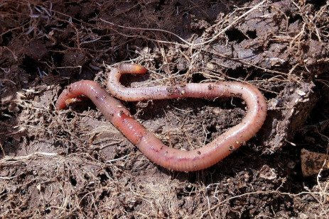 Earthworm Production