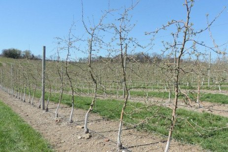 Orchard Production Systems - Selection Considerations
