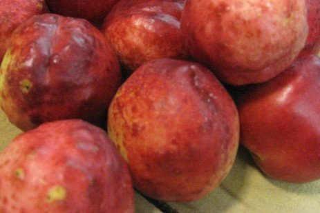 Nectarine Fruit Disorder - Nectarine Pox Prevention
