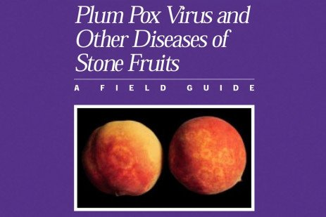 Plum Pox Virus on Peach Bark, Blossoms and Leaves