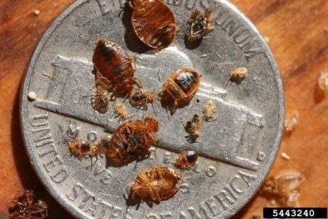 Bed Bug Precautions for Travelers