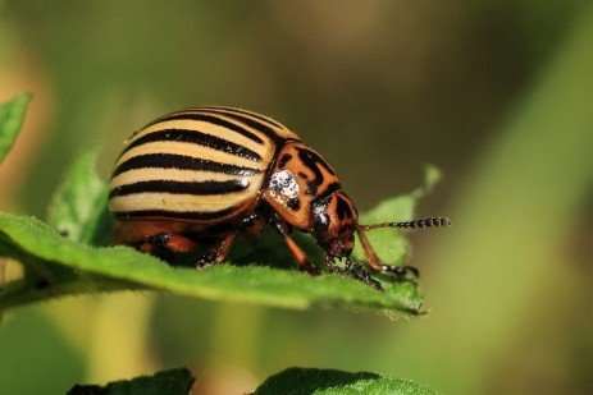How to Treat Common Garden Pests