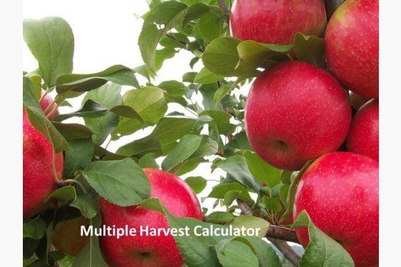 Honeycrisp Multiple Harvest Calculator