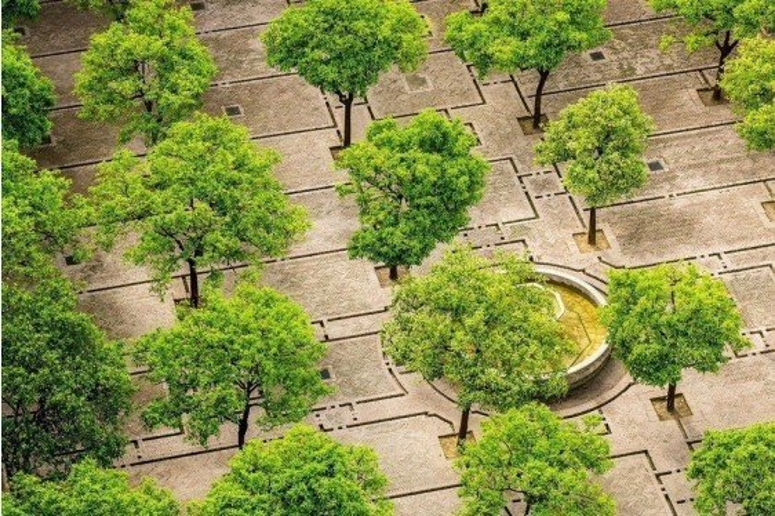 Landscape Tree Factsheets