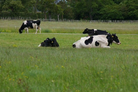 Alternative Supplementation for Grazing Dairy Cows