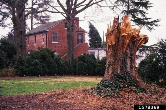 Preventing Storm Damage to Trees
