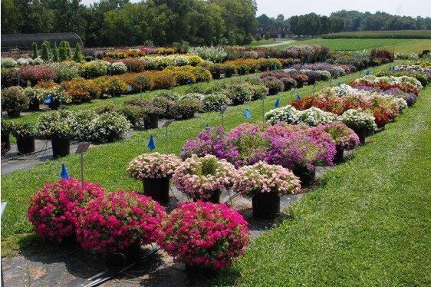 Flower Trials Field Day
