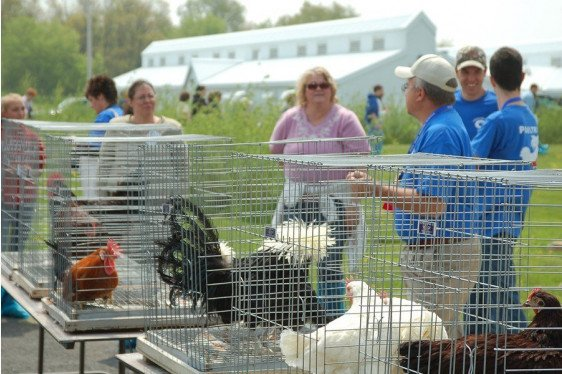 Youth Poultry 101