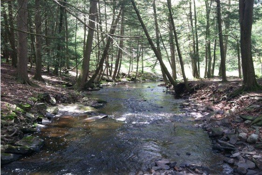 Woods in Your Backyard Webinar Series