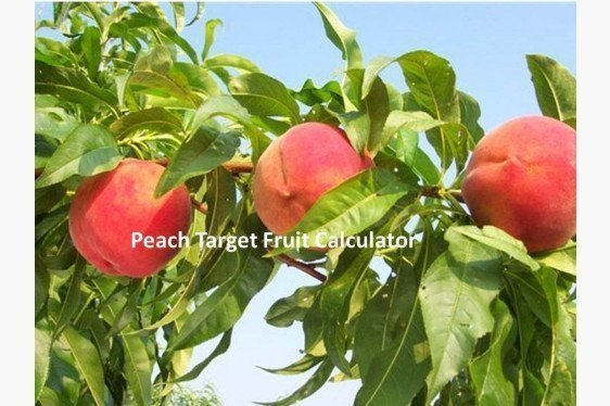 Peach Target Fruit Calculator