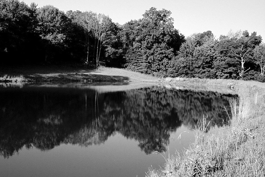 Management of fish ponds in pennsylvania for Fish pond management