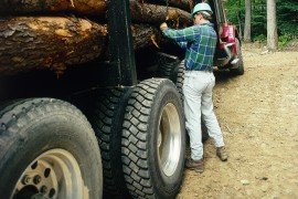 A logger secures harvested logs on a truck.