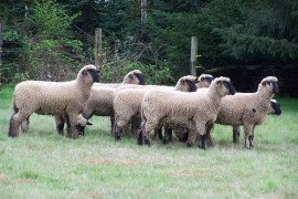 Sheep selection should start with performance and then a visual evaluation.